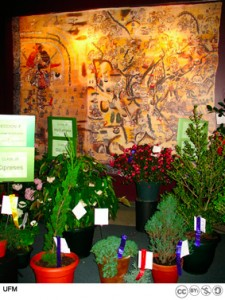Garden club exhibit at the Lienzo de Quauhquechollan.